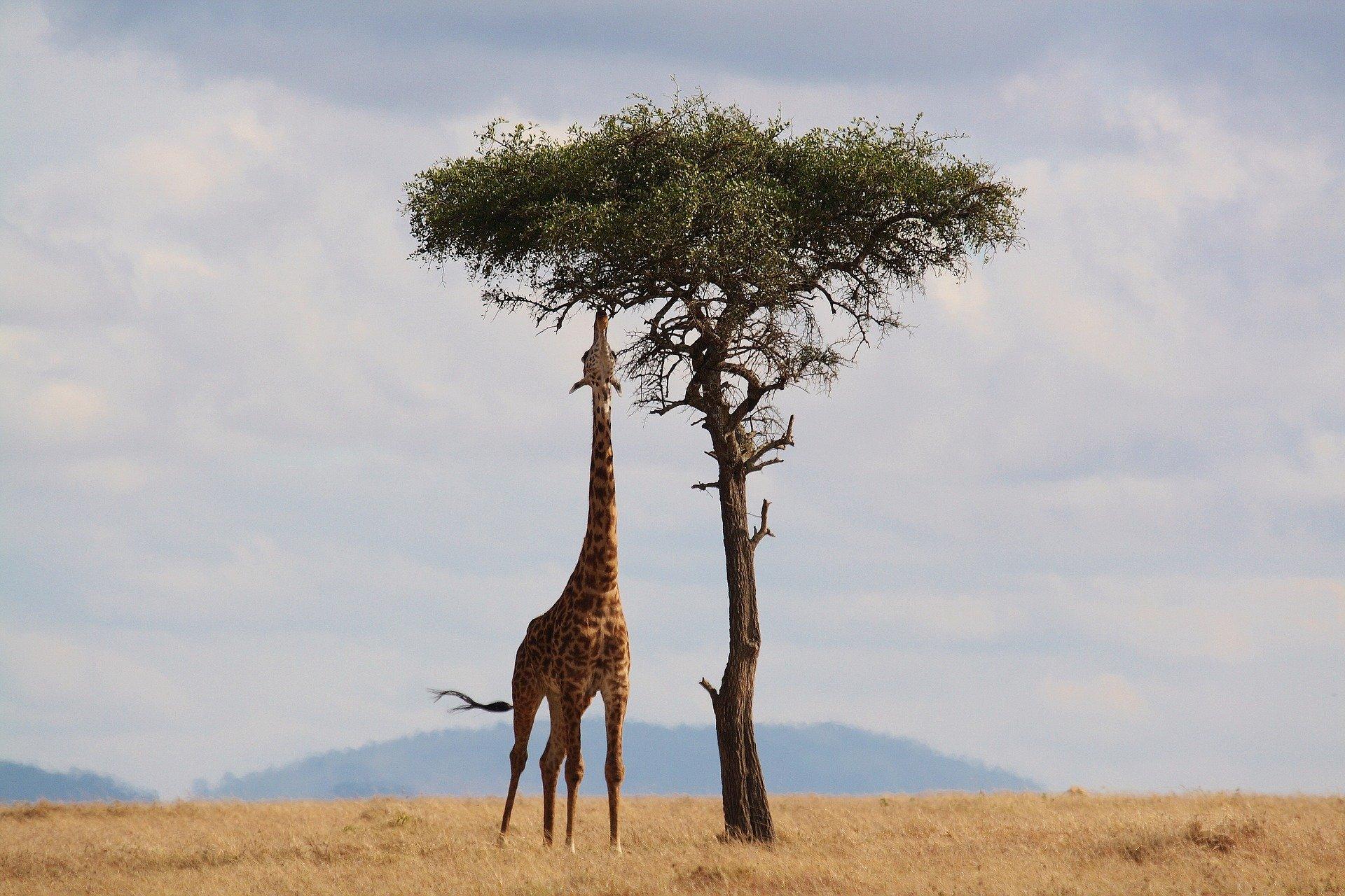 Best African Safari Tours
